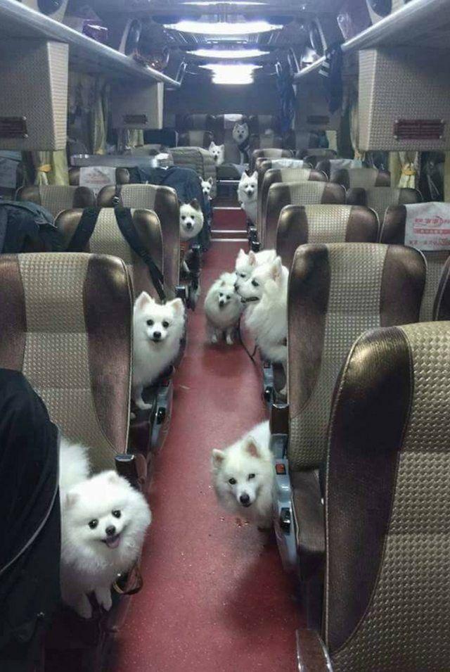 Honden Bus - Walk For Dogs 2017