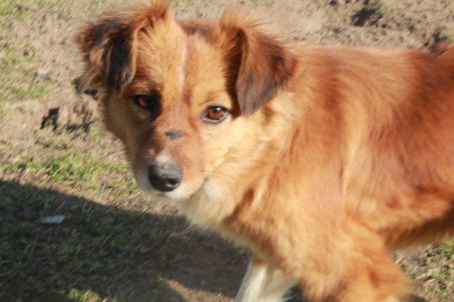 Akiko (Gereserveerd voor adoptie)